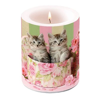 Candle Cats In Box 12 cm