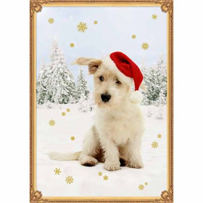 Christmas calendar Four Paws In The Snow
