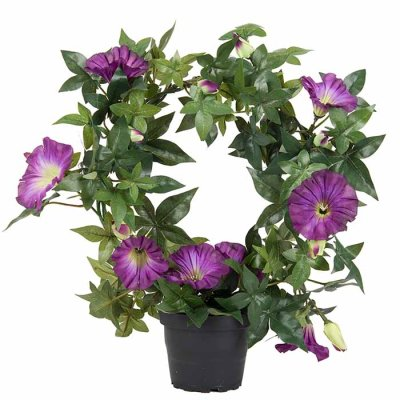 Morning glory wreath violet