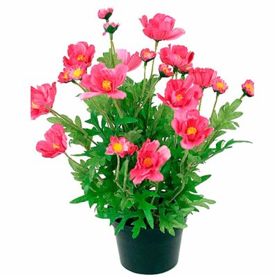 Cosmos pink 32 cm
