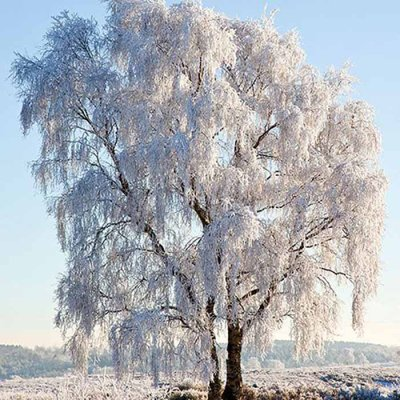 Napkin Frozen tree