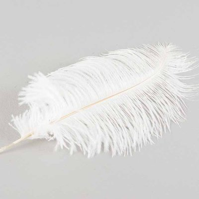 Feather Ostrich white 40 cm